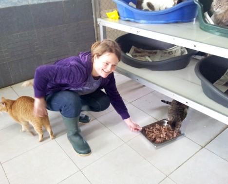 feeding 2 cats