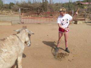 aruba donkey